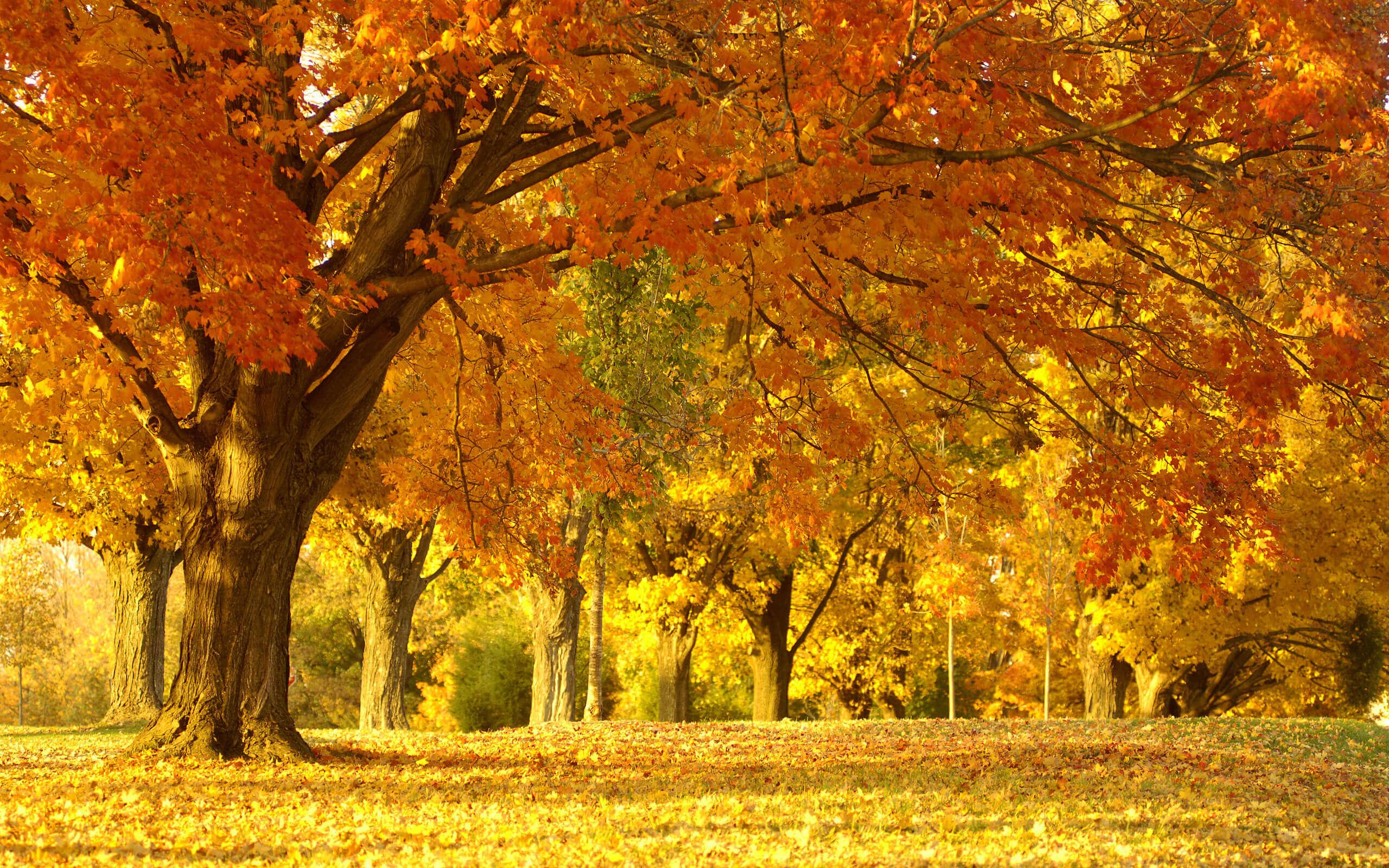 Фото  к новости Что делать в выходные осенью