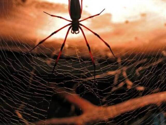 Picture quest room In the Spider`s lair в городе Zaporizhia
