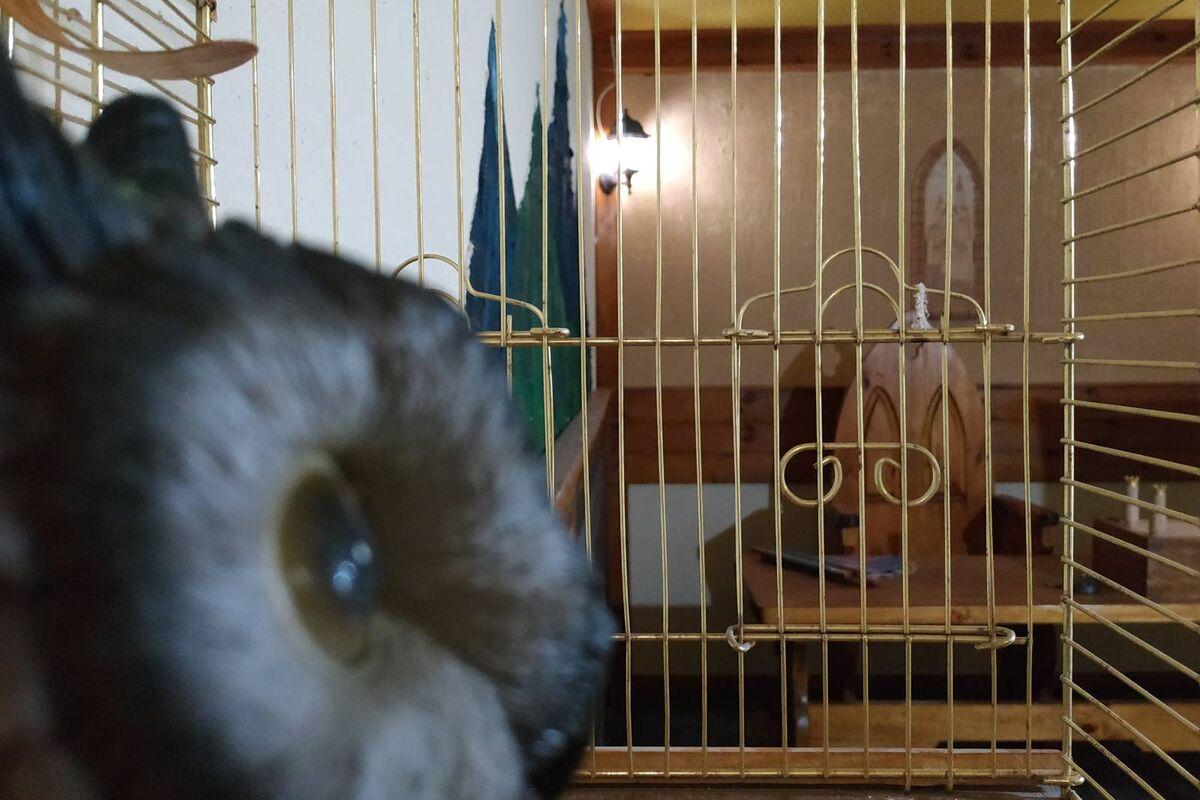 1 Фото квест комнаты Тамплиеры, мистическая легенда в городе Киев